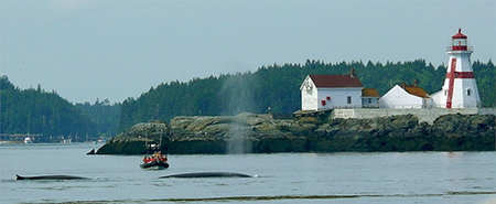 lighthouse_whales